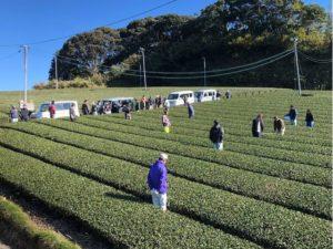 2019年茶園審査会の写真